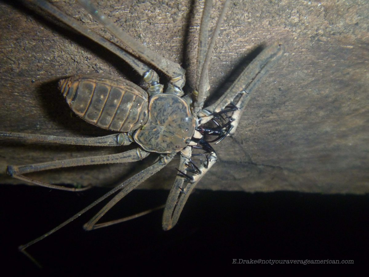 Creepy Crawlies of the Night