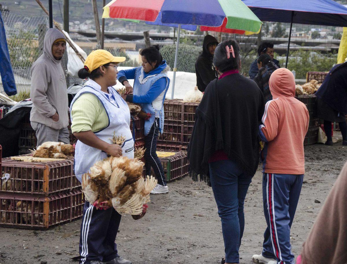 Selling chickens at the animal market, Otavalo, Ecuador   ©Angela Drake