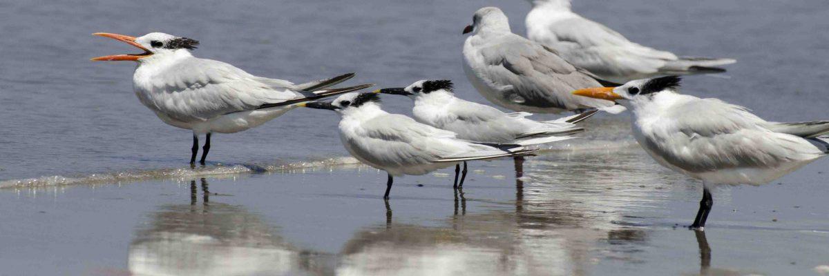 Birdwatching & Beachcombing