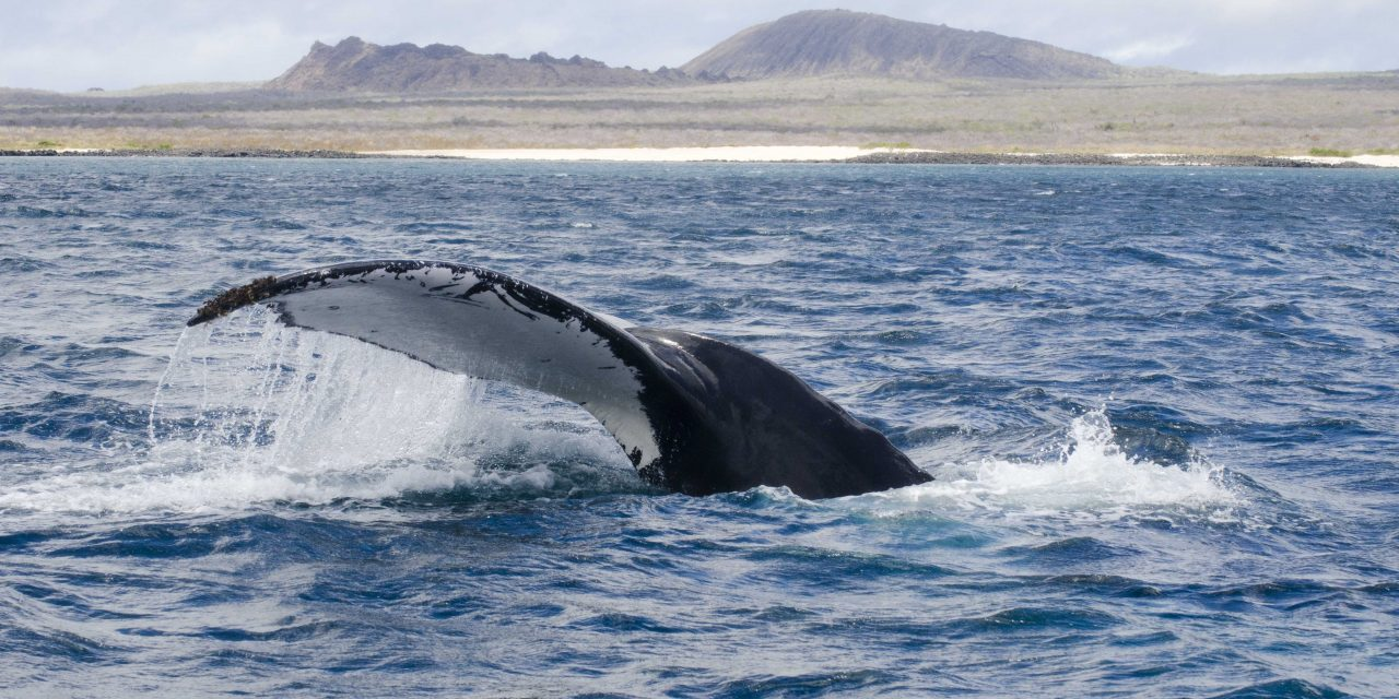 The Dream Galapagos Land Based Tour