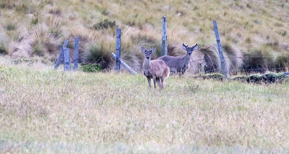 The Chakana Reserve: Condors & More