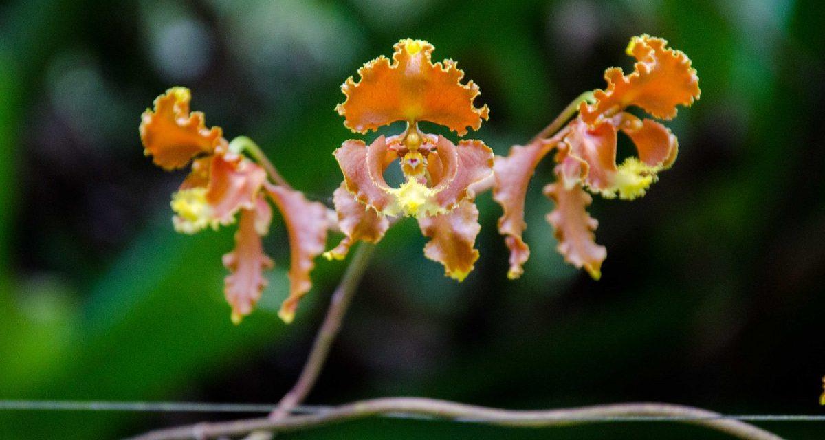 El Pahuma: A Wild Orchid Reserve Near Quito