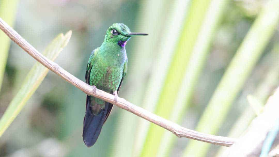 Alambi – A Hummingbird Paradise