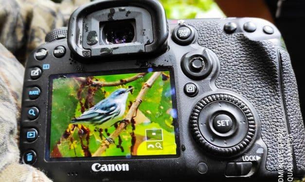 Conteo Navideño de Aves – El Chaco y Quijos